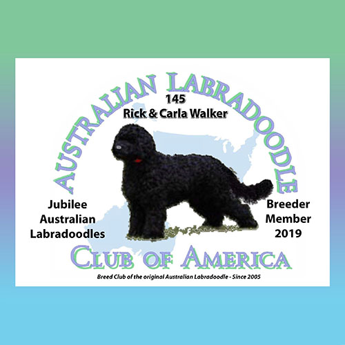 Mini Goldendoodle Puppies & Adults for Sale in MI | Jubilee
