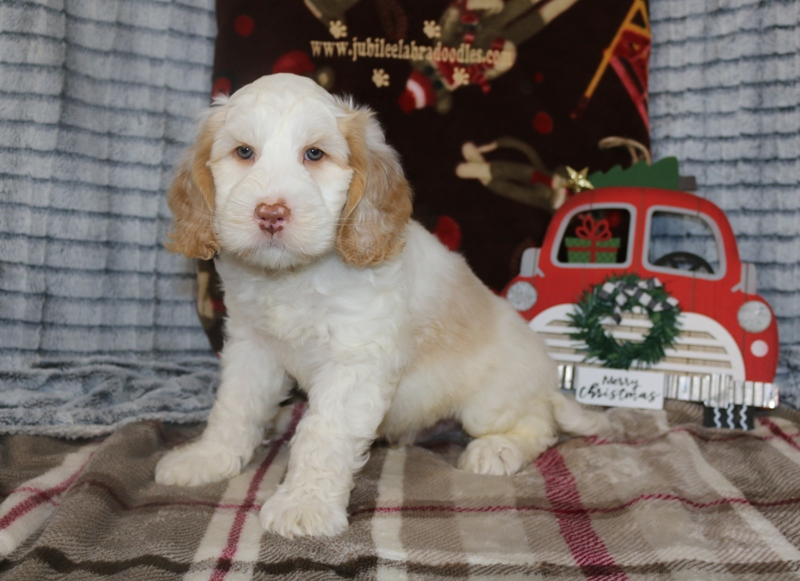 Geneva & Cash Boy – Click on Litter Pic to See Puppies