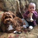 Kids and Puppies: Tips for Happily Raising Both