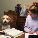 Tricks to Teach Your Labradoodle